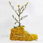 Nike-Flower-Sneakers-1